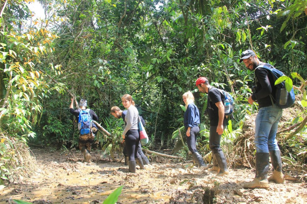 Hikes in the Jungle